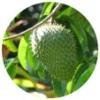 綠花恩南番荔枝