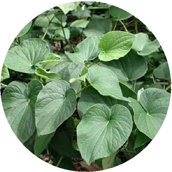 卡瓦胡椒萃取